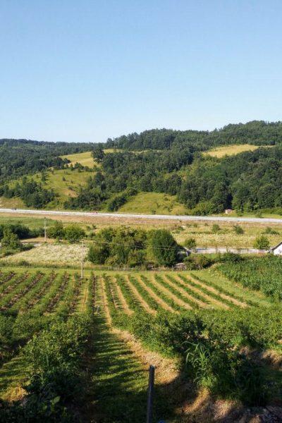 Borovnica, Ljig